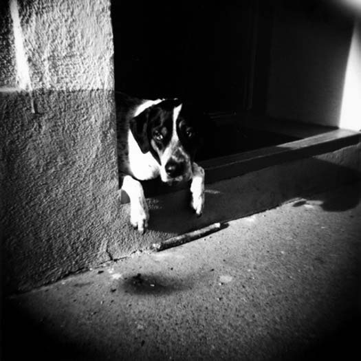 Dog Portraits Photography Film Black And White