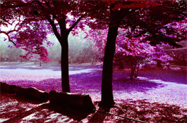 LomoChrome Purple: Your Questions, Answered