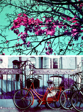 The LomoChrome Purple Film