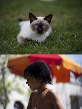 New Photos from the New Petzval (D)SLR Lens Sample